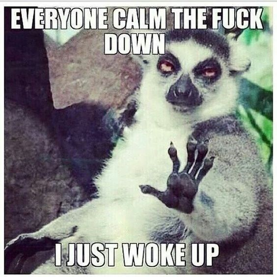 Lemur - EVERYONE CALM THE FUCK DOWN JUST WOKE UP