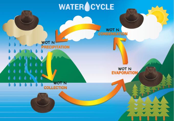 Water - WATER CYCLE WOT N CONDENSATION WOT N PRECIPITATION WOT N EVAPORATION WOT N COLLECTION