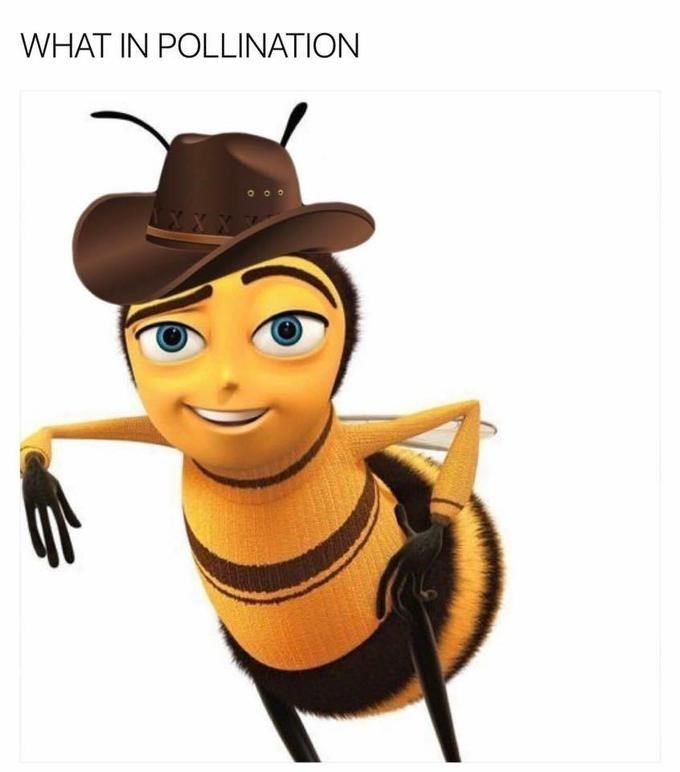 Animated cartoon - WHAT IN POLLINATION XX