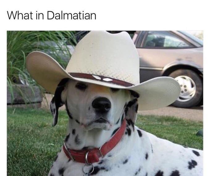 Dog - What in Dalmatian