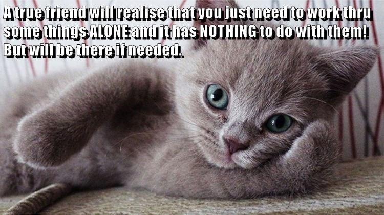 friends cat memes - 9104714496