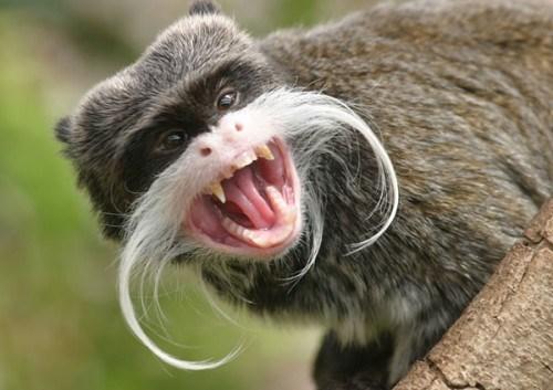 animals mustaches - Mammal