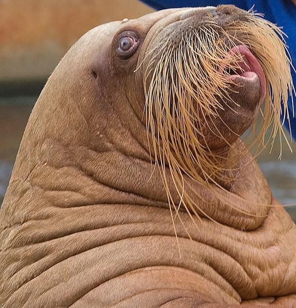 animals mustaches - Vertebrate