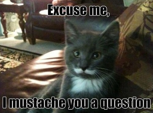 animals mustaches - Cat - Excuse me, Imustache you a question