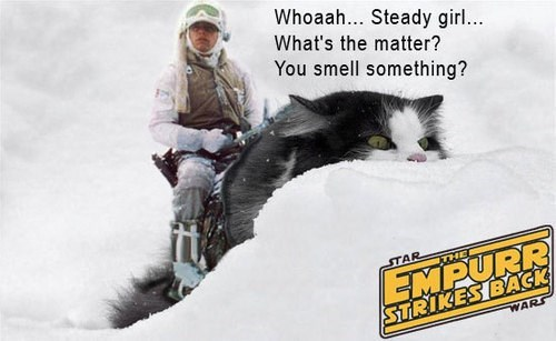 Snow - Whoaah... Steady girl... What's the matter? You smell something? EMPURR STRIKES BACK STAR THE WARS