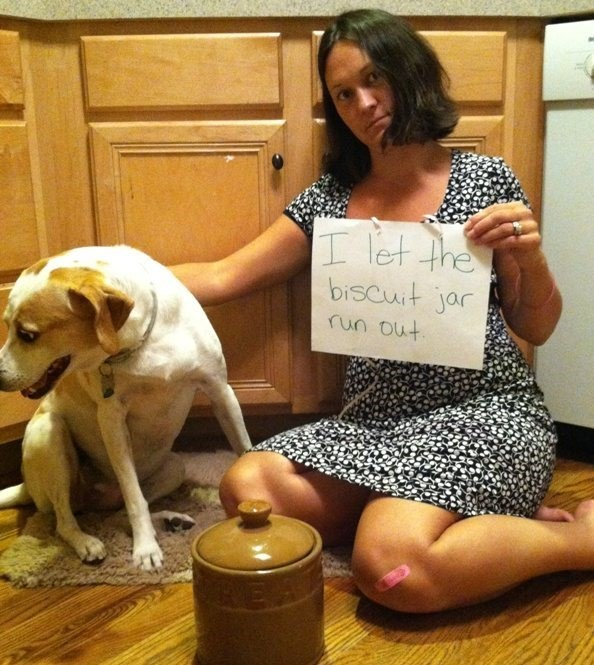 human shaming - Canidae - let the biscuit jar run out