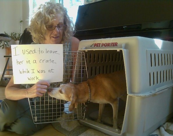 human shaming - Animal shelter - 4PET PORTER Used to leave her in a crate while I was at Work