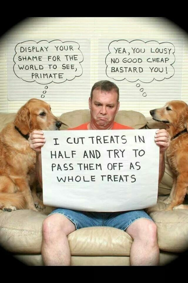 human shaming - Dog - DISPLAY YOUR SHAME FOR THE WORLD TO SEE, PRIMATE YEA, YOU LOUSY NO GOOD CHEAP BASTARD YOu! I CUT TREATS IN HALF AND TRY TO PASS THEM OFF AS WHOLE TREATS O0 O