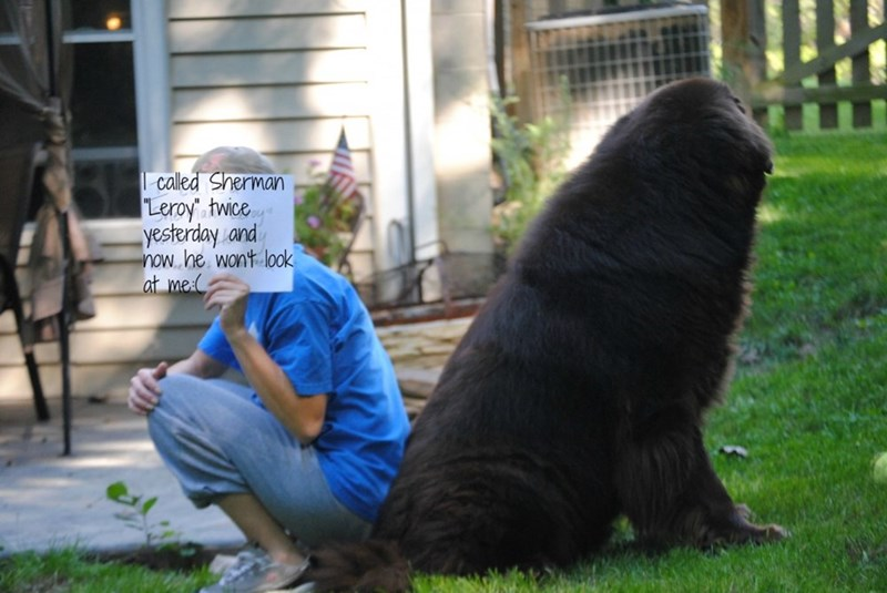 """human shaming - Vertebrate - called Sherman Leroy"""" twice yesterday and now he wont look at me"""