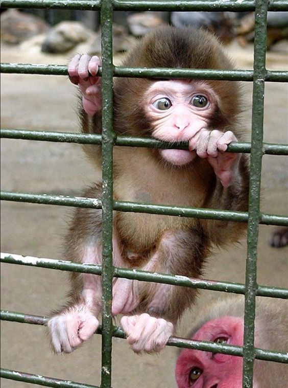 adorable baby monkey hanging on the side of a cage