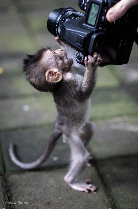 cute baby monkey playing with a camera