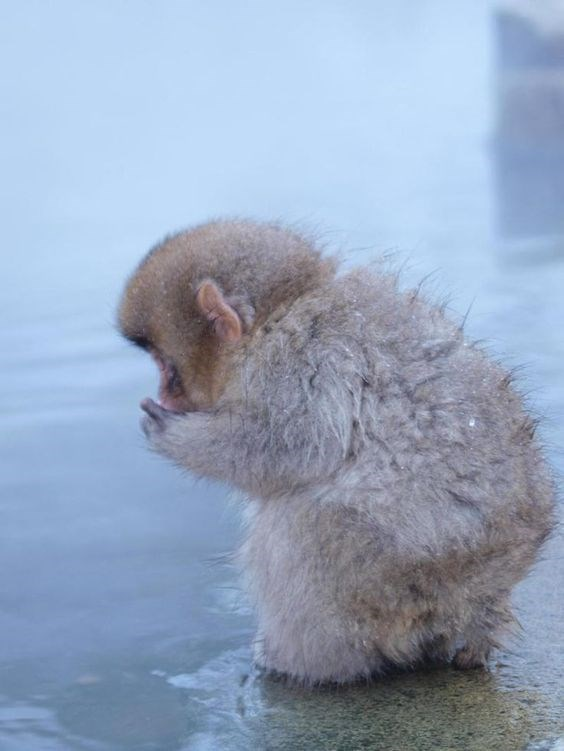fuzzy baby monkey standing at the edge of the water