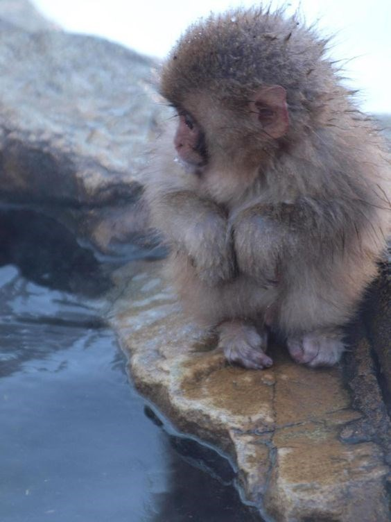 fuzzy baby monkey sitting at the edge of the water