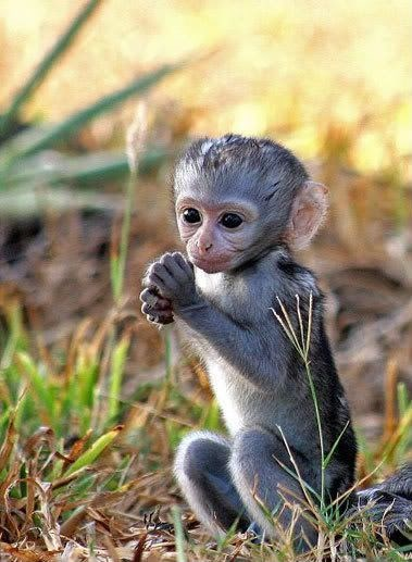 cute baby monkey sitting in the grass