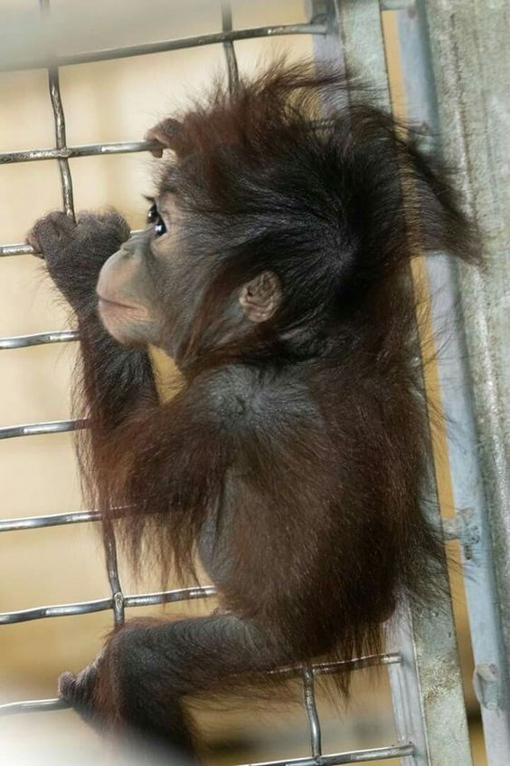 baby monkey hanging from the side of a cage