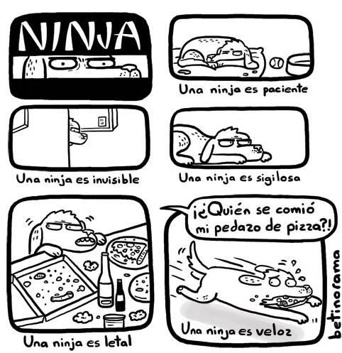 el perro es un ninja cuando de comida se trata