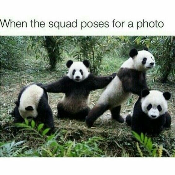 Panda - When the squad poses for a photo