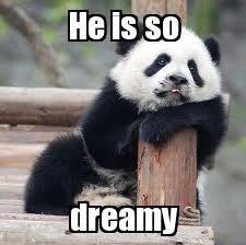 Panda - He is so dreamy