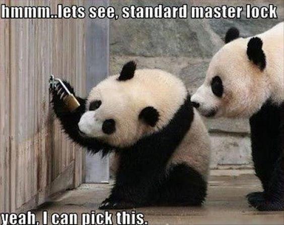 Panda - hmmmlets see, standard master lock yeah, I can pick this