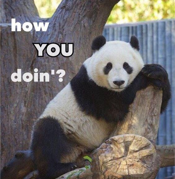 Panda - how YOU doin'?