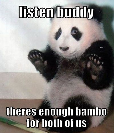 Panda - listen buddly theres enough bambo for both of us