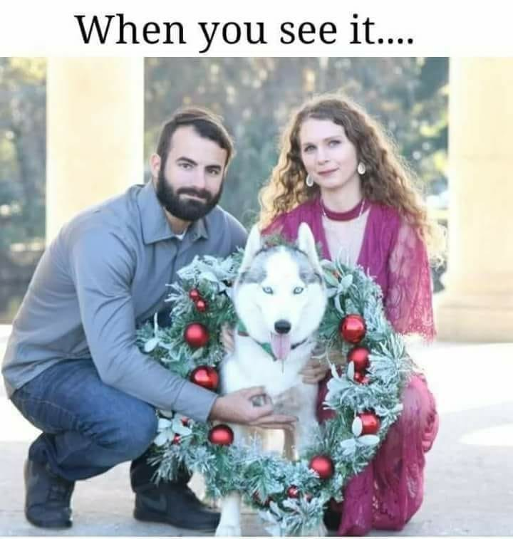 Canidae - When you see it....
