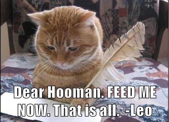 Cat - Dear Hooman. FEED ME NOW. That is all Leo