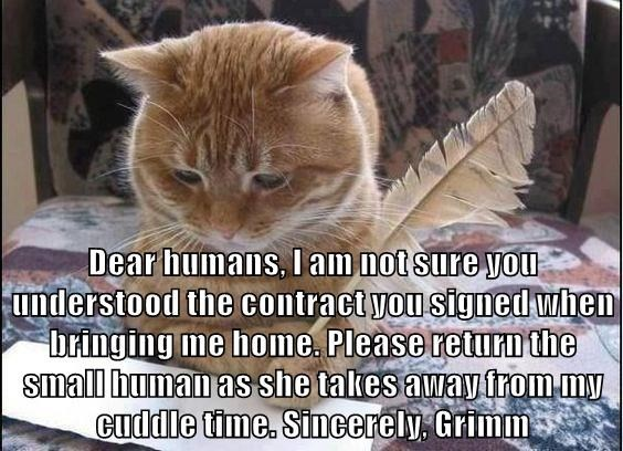 Cat - Dear humans, l am not sure yoOu understood the contract you signed when bringing me home. Please return the small human as she takes away from my cudldle time. Sincerely Grimm