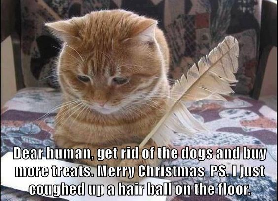 Cat - Dear human, get rid of the dogs and buy more treats. Merry Christmas PS Diust COughed up a hair ballon the floor