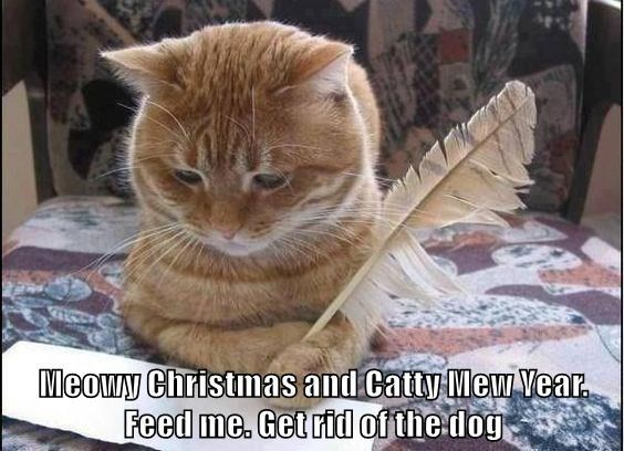 Cat - Meowy Christmas and Catty MewYear Feed me. Get rid of the dog