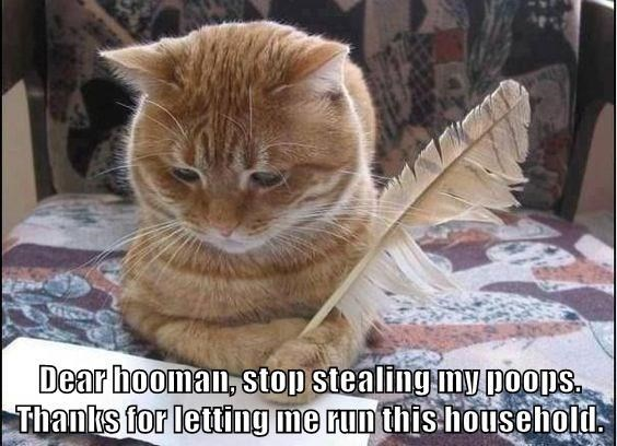 Cat - Dear hooman, stop stealing-my poops Thanks for letting me runthis household