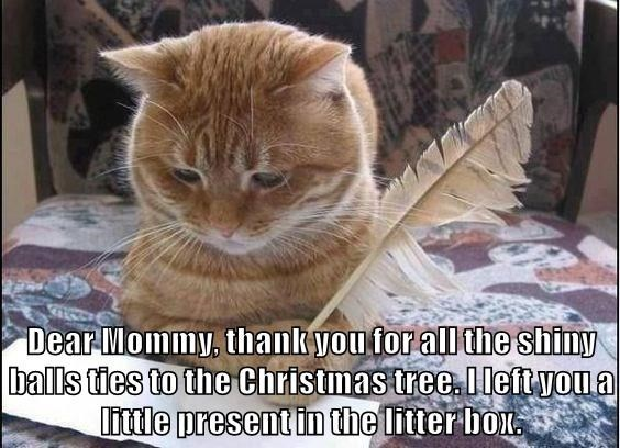 Cat - Dear Mommy, thank you for all the shiny |balls ties to the Christmas tree Ileft you a Iittle present in the litter box