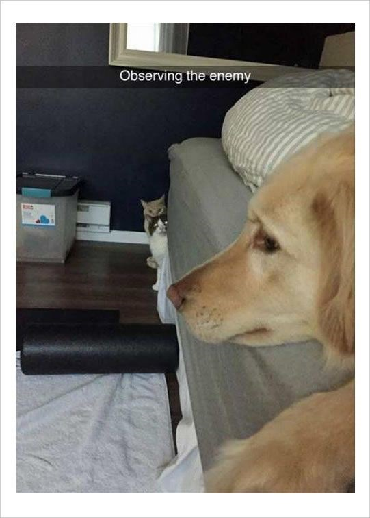 snapchat - Dog - Observing the enemy