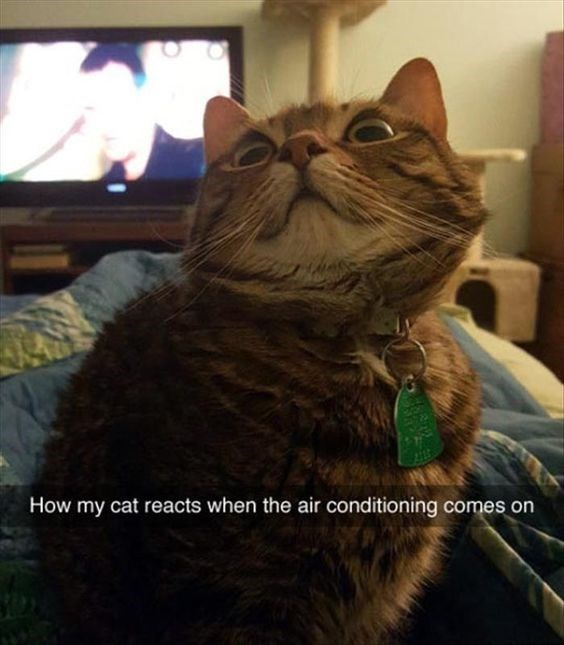 snapchat - Cat - How my cat reacts when the air conditioning comes on