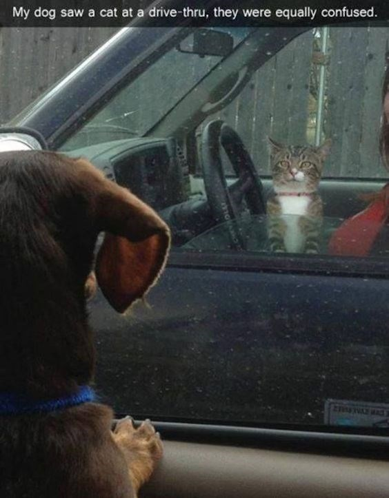 snapchat - Vehicle door - My dog saw a cat at a drive-thru, they were equally confused.