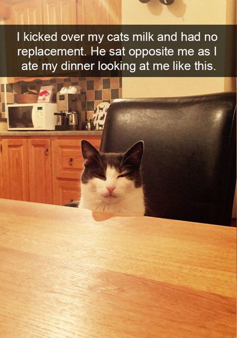 snapchat - Cat - I kicked over my cats milk and had no replacement. He sat opposite me as I ate my dinner looking at me like this.