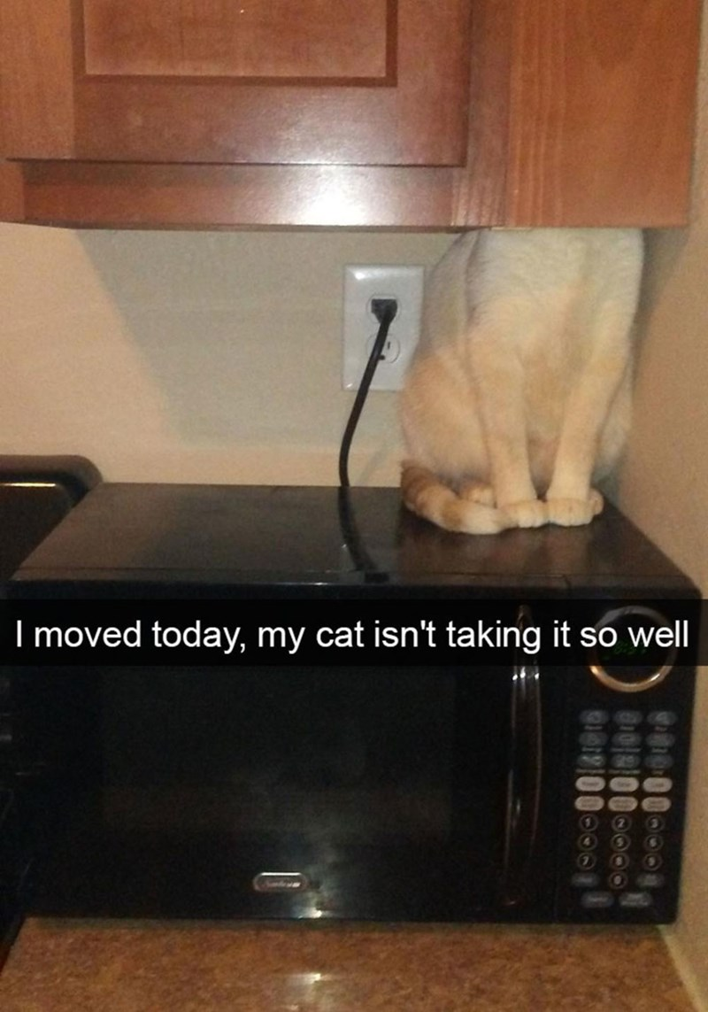 snapchat - Room - I moved today, my cat isn't taking it so well 4 000 0