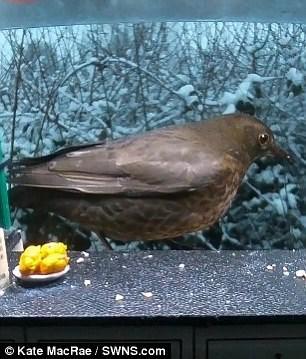 Bird - Kate MacRae /SWNS.com