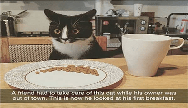 snapchat - Cat - A friend had to take care of this cat while his owner was out of town. This is how he looked at his first breakfast.