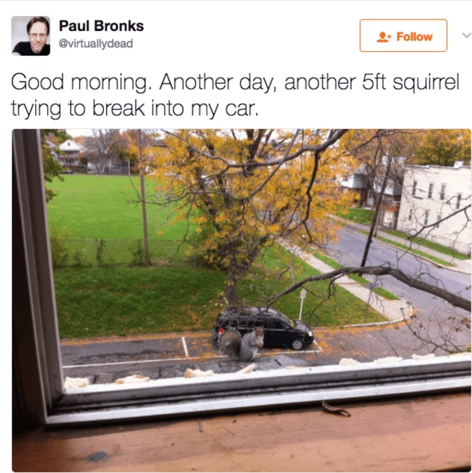 Tree - Paul Bronks Follow @virtuallydead Good morning. Another day, another 5ft squirrel trying to break into my LI