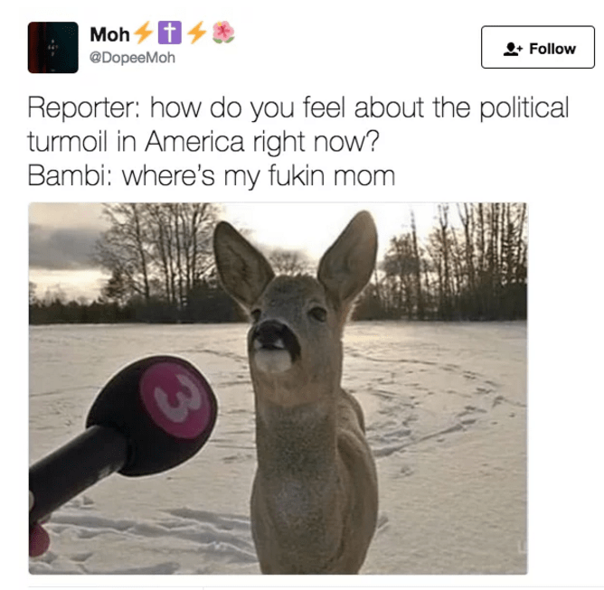 Kangaroo - Moh @DopeeMoh Follow Reporter: how do you feel about the political turmoil in America right now? Bambi: where's my fukin mom