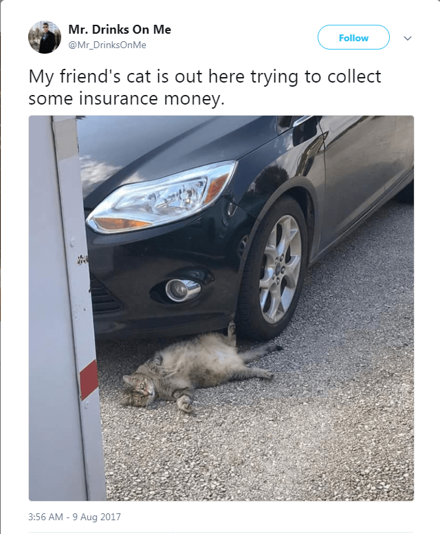 White - Mr. Drinks On Me Follow @Mr_DrinksOnMe My friend's cat is out here trying to collect some insurance money. 3:56 AM -9 Aug 2017