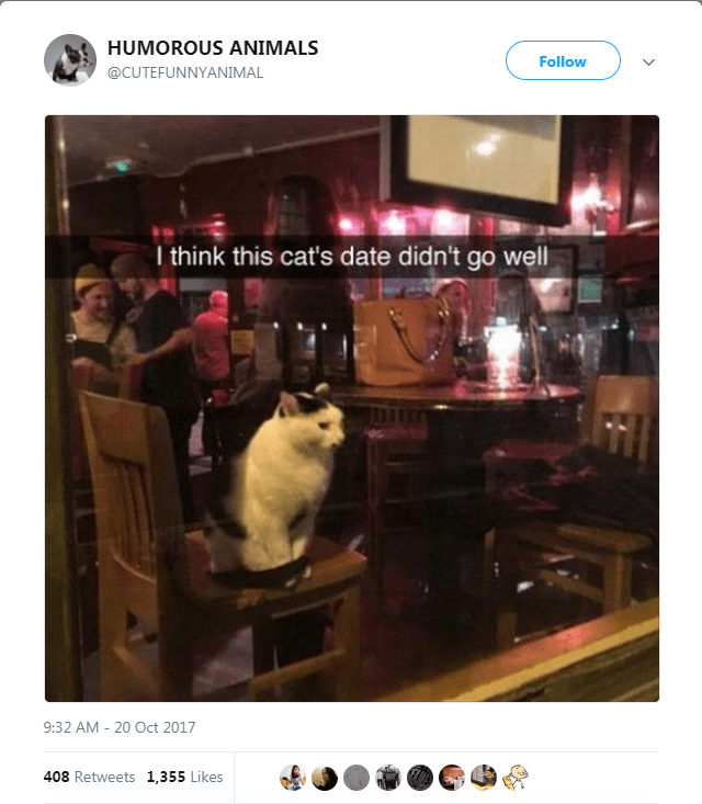 Website - HUMOROUS ANIMALS Follow @CUTEFUNNYANIMAL I think this cat's date didn't go well 9:32 AM 20 Oct 2017 408 Retweets 1,355 Likes