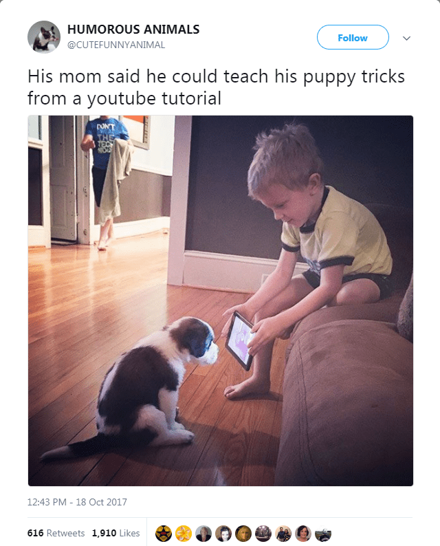 Photo caption - HUMOROUS ANIMALS Follow @CUTEFUNNYANIMAL His mom said he could teach his puppy tricks from a youtube tutorial 12:43 PM 18 Oct 2017 616 Retweets 1,910 Likes