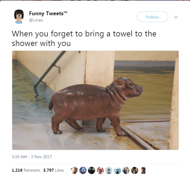 Canidae - Funny TweetsTM Follow @Lmao When you forget to bring a towel to the shower with you 3:30 AM - 3 Nov 2017 1,216 Retweets 3,797 Likes