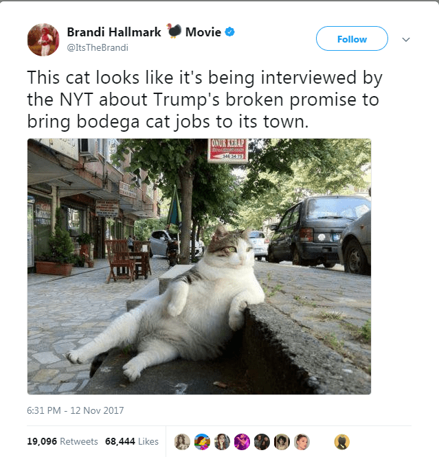 Adaptation - Brandi Hallmark Movie Follow @ItsTheBrandi This cat looks like it's being interviewed by the NYT about Trump's broken promise to bring bodega cat jobs to its town ONUR KEBAP toutoo 346 34 75 6:31 PM - 12 Nov 2017 19,096 Retweets 68,444 Likes