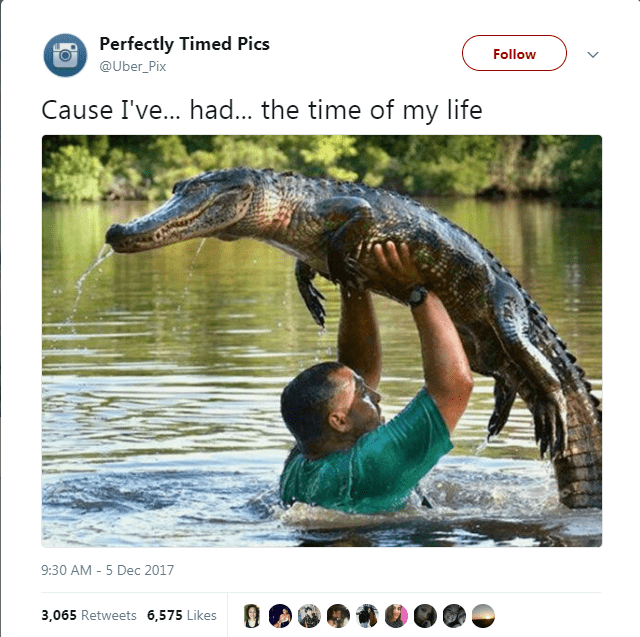 Adaptation - Perfectly Timed Pics Follow @Uber_Pix Cause I've... had... the time of my life 9:30 AM-5 Dec 2017 3,065 Retweets 6,575 Likes