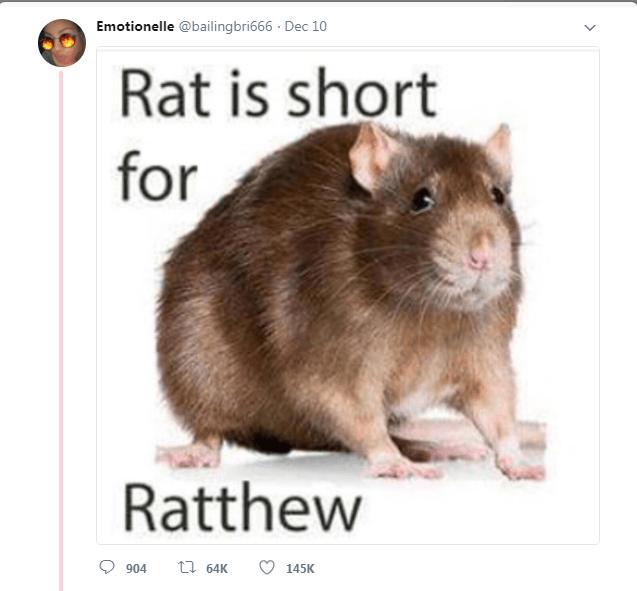 Mammal - Emotionelle @bailingbri666 Dec 10 Rat is short for Ratthew ti 64K 904 145K