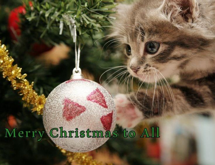 funny cat memes christmas cat meme - 9106500608