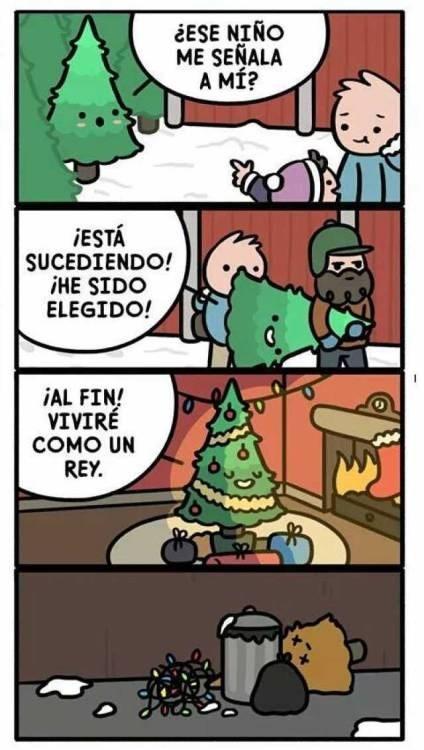 corta reseña de la vida y muerte de los arboles de navidad